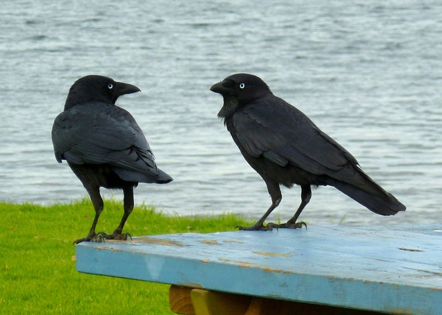 Two birds in conversation