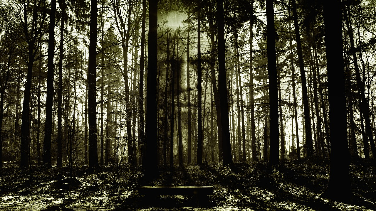 Forest scene with face in the trees