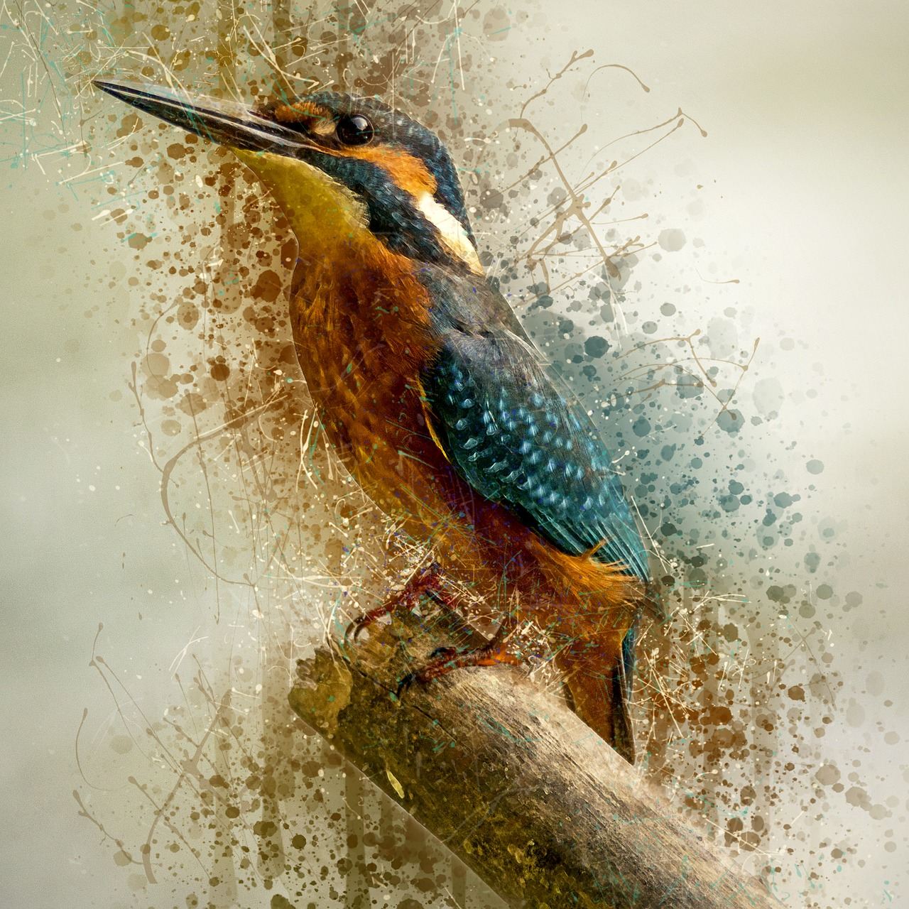 Drawing of a kingfisher