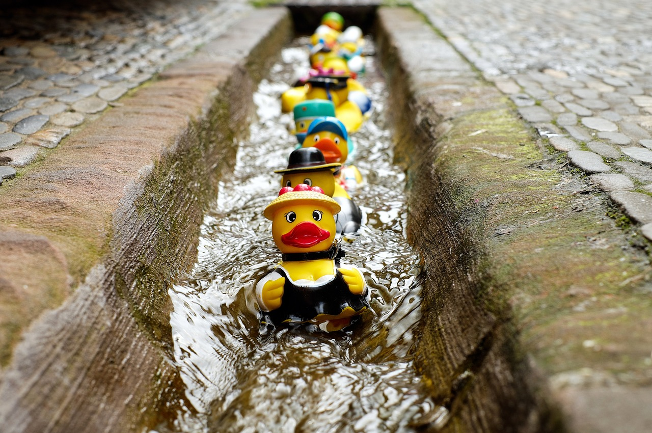 Rubber ducks floating along a drain